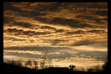 Golden Silver Dawn Clouds by RooCat