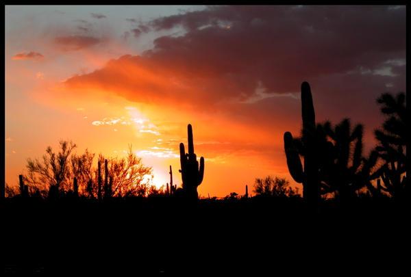 Winter Saguaro Sunset by RooCat