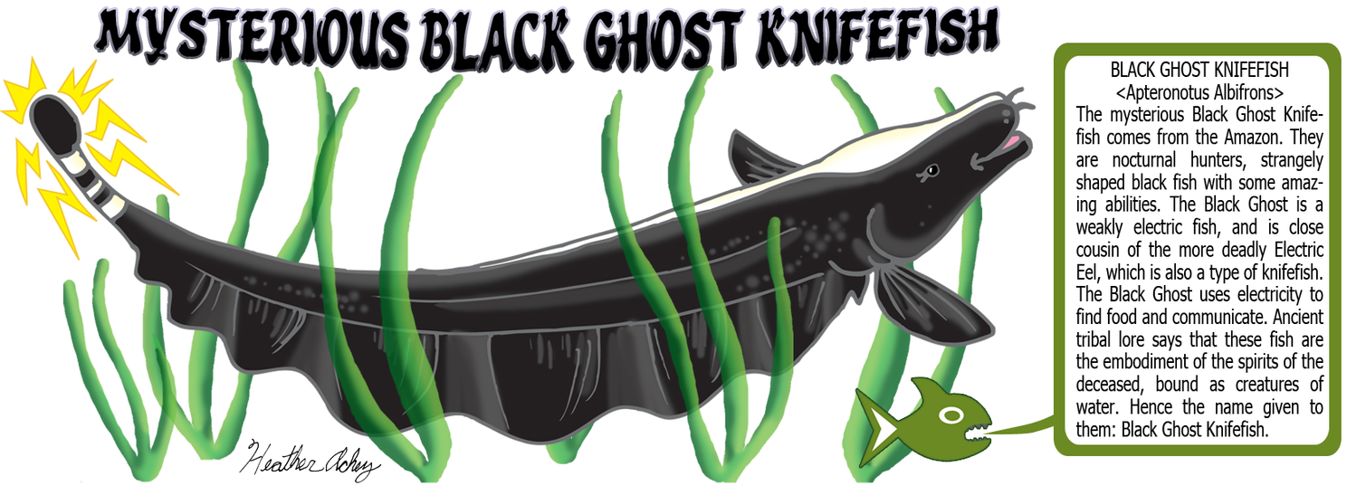 Black Ghost Knifefish Design by Tibby101