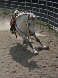 western - horse by Simlinger