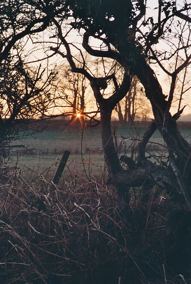 Ostara Sunset