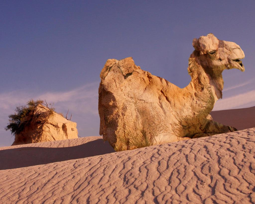 Camel by caglarsasmaz