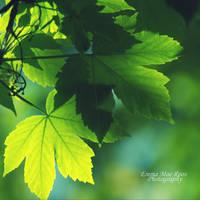 Green. by MaeRoos
