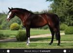 Briar Mills' Cassady