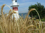 Lighthouse in wheat