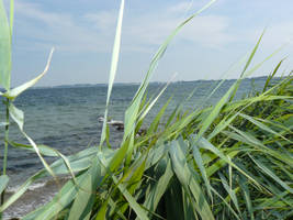 Grass in front of the Sea by nicolahu