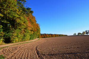 Autumn Dream by nicolahu
