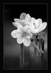 Little Flowers by Rhinoseri