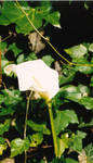 White flower with yellow bit