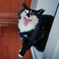 vampire kitten by mytiko-chan-is-back