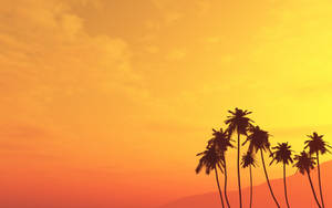 Palm Tree Wallpaper by pntbll248