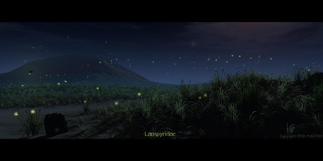 Lampyridae by pntbll248