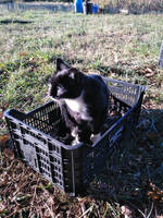 Cat of Schrdinger