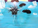 Black Water Dragon by silvershadoww