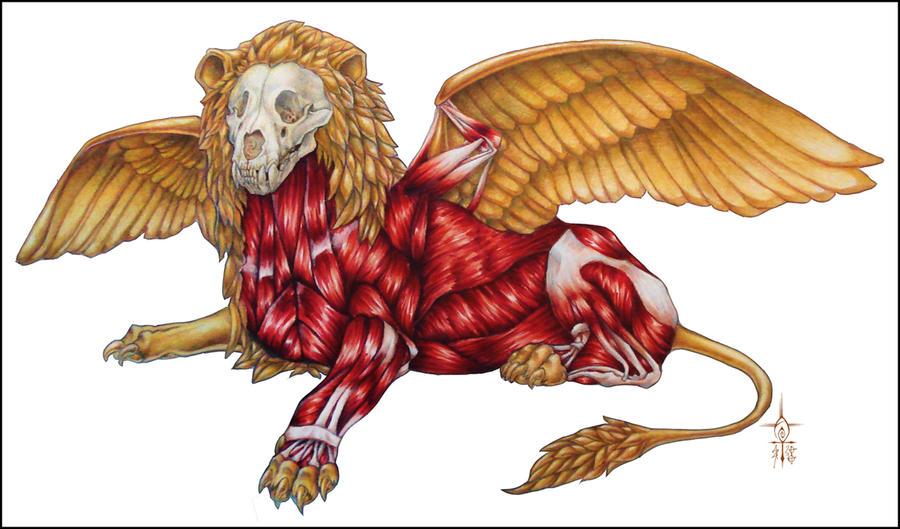 Winged Lion Anatomy by Anuwolf on DeviantArt