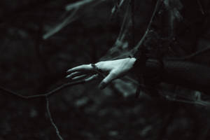 Autumn flight through the threads of web. by NatalieVing
