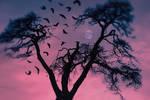 Lungs of dark forest