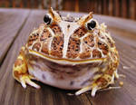 Good frog..STAY