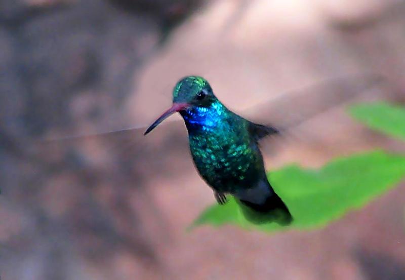 HUMMING BIRD by wonenownlee
