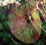 A RAINBOW WEB