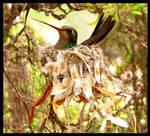 Li'L Mama Hummingbird