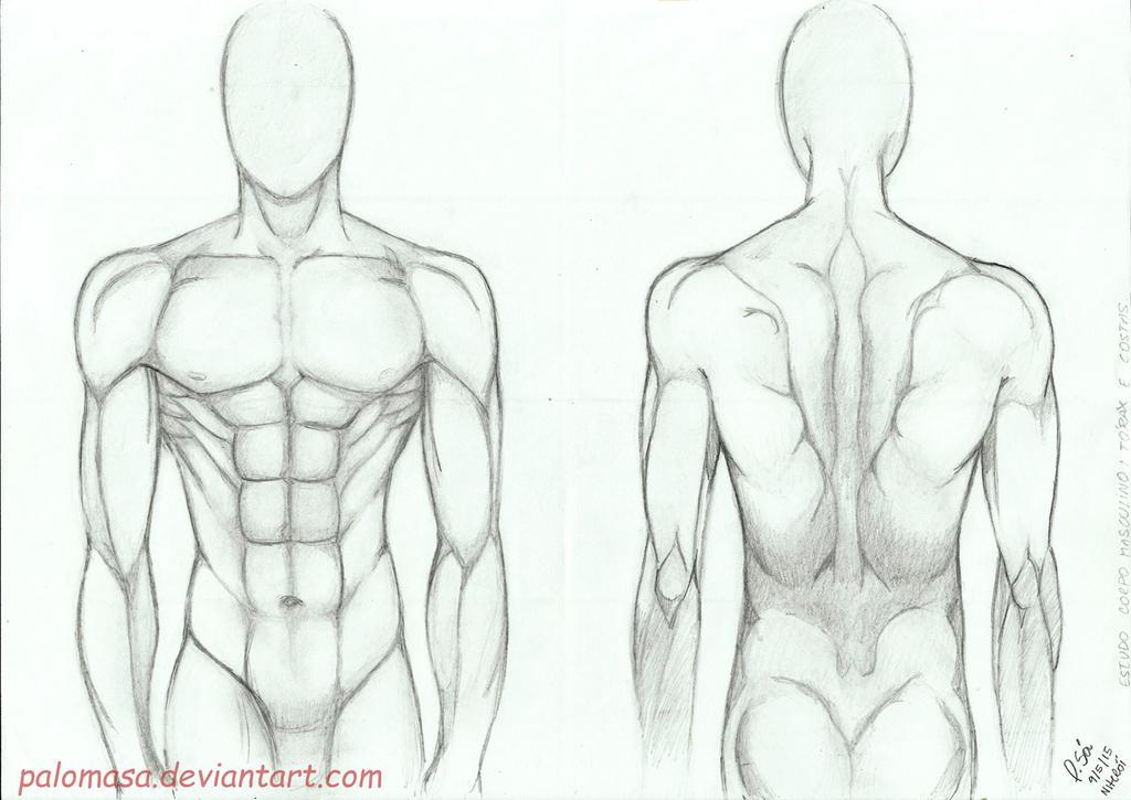 Male-anatomy-study by PalomaSa