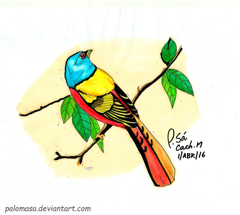 Escrivao de sete cores by PalomaSa