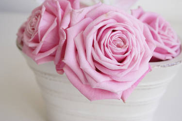 Pink Roses III by onelook