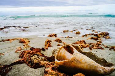 beachy by Risible-Axolotl