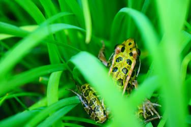 Toad by Risible-Axolotl