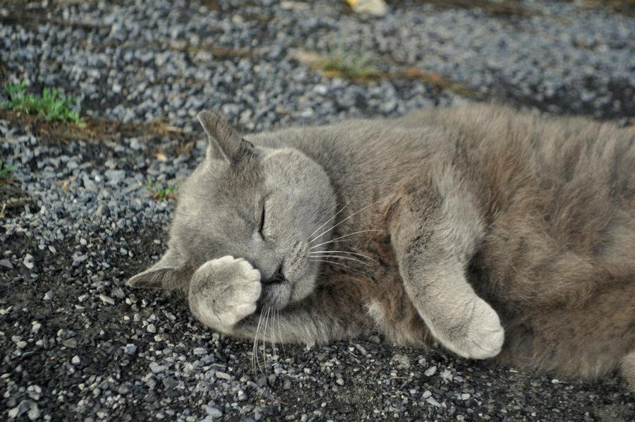 Sleeping Cat by MireInHypocrisy