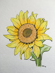 Sunflower by epicpoodle