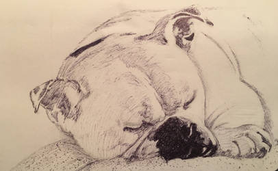 Sleepy bulldog by epicpoodle