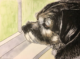 Border Terrier by epicpoodle