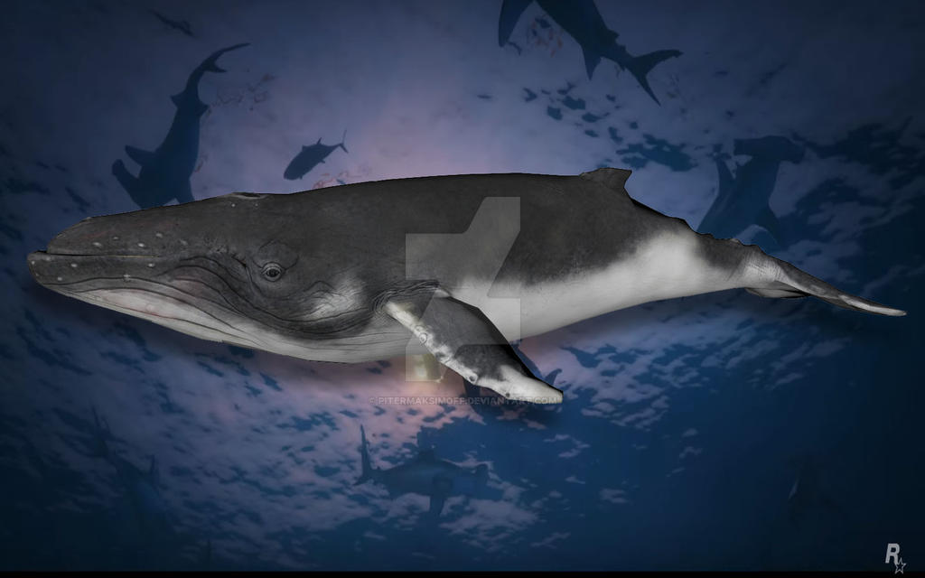 Humpback Whale by Pitermaksimoff