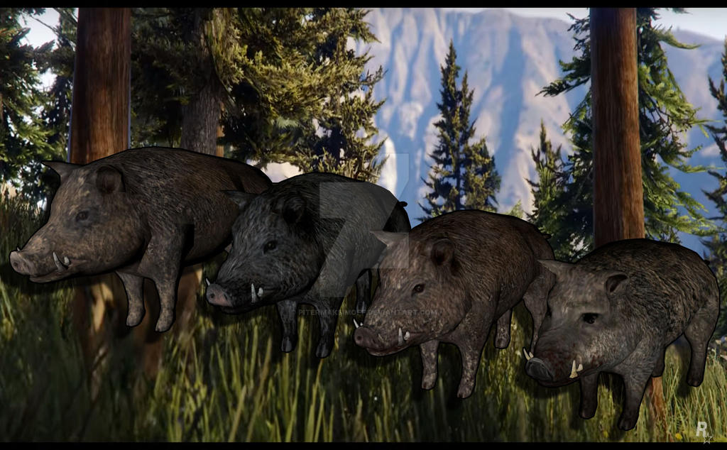 Boar Collection by Pitermaksimoff