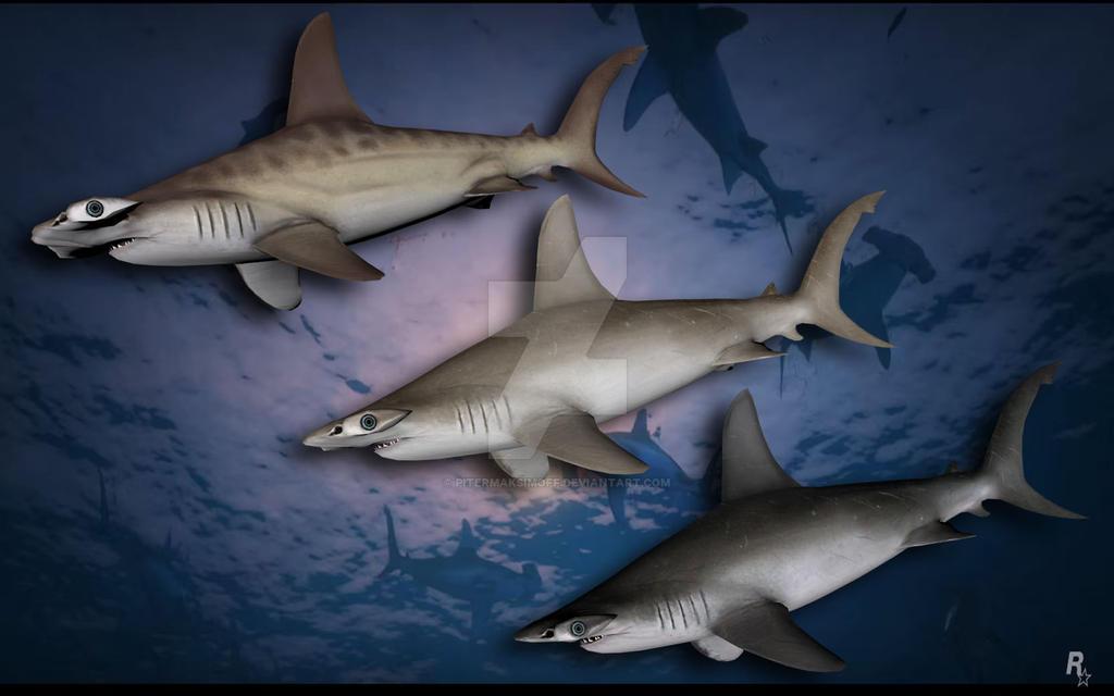 Hammerhead Shark by Pitermaksimoff