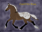 Cavitto Foal 1146