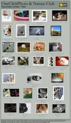 December Contest: Pets