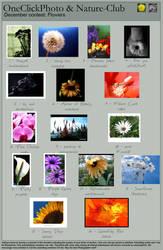 December Contest: Flowers