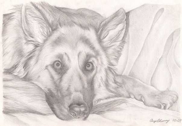 Pencil drawing of dog by angelfaces1986