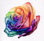 rainbow rose in biro / ballpoint pen