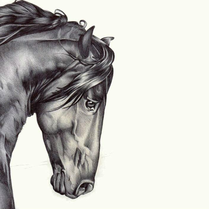 Black horse head drawing - photo#7