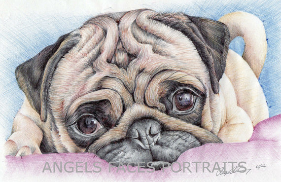 Pug Drawing In Colour Biro By Angelfaces1986 On Deviantart Colour Drawing