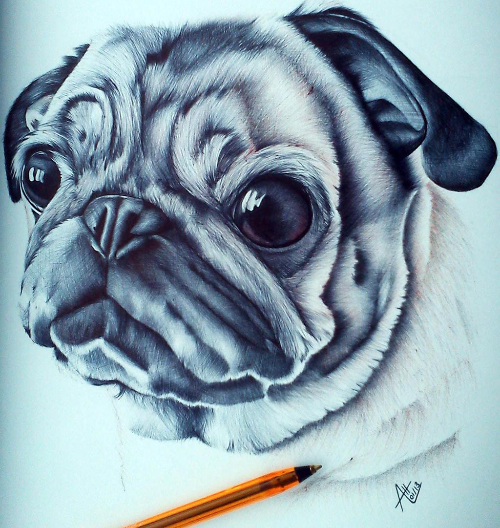 Biro ballpoint pen pug drawing