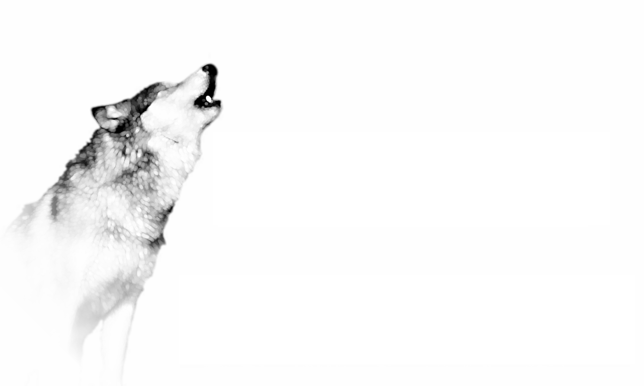 Wolf Wallpaper ID By Niall Larner
