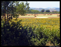 Covering the Land Yellow by ale07