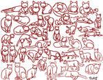 Feline Poses