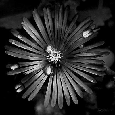 Center of Hope. by SweetPandemonium90