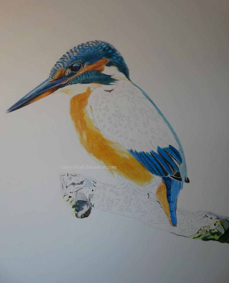 WIP II - Kingfisher on a branch by LarissaBoef